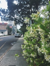 And the honeysuckle. Charleston smells AMAZING.