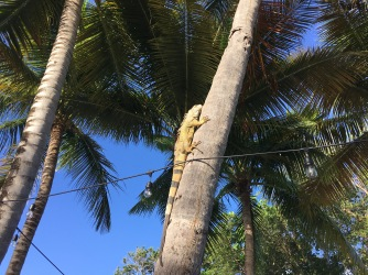 We didn't see iguanas until the last two days, and then we saw so many!