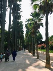 between the medina and the palace