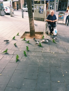 This man was feeding pigeons... and parrots. PARROTS.